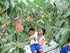 築城果樹園